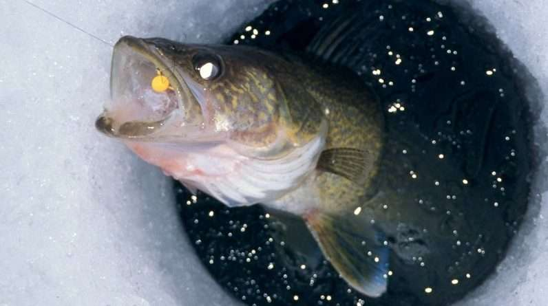 Upgrade Your Ice Fishing Cabin Use Quiet Clean Power